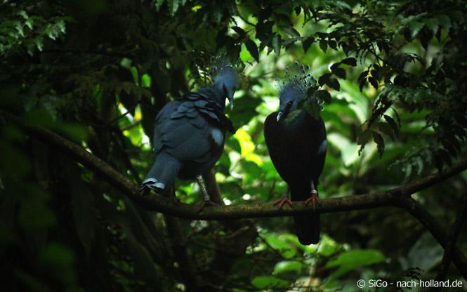 burgers' zoo vögel