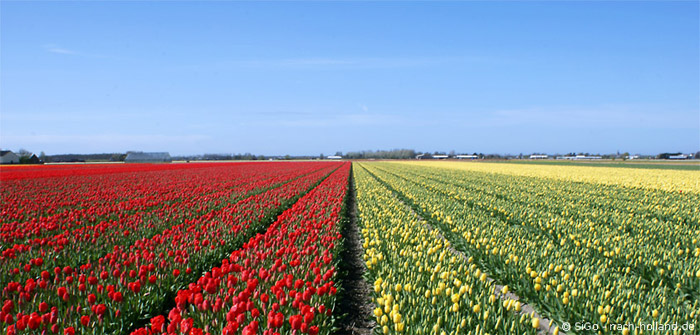 tulpenfelder holland