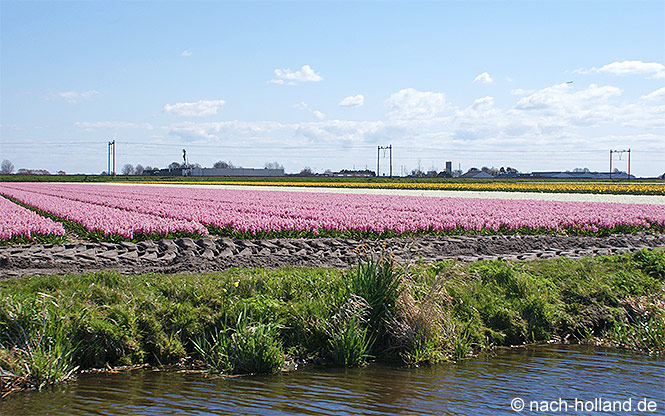 Blumenfelder in Holland