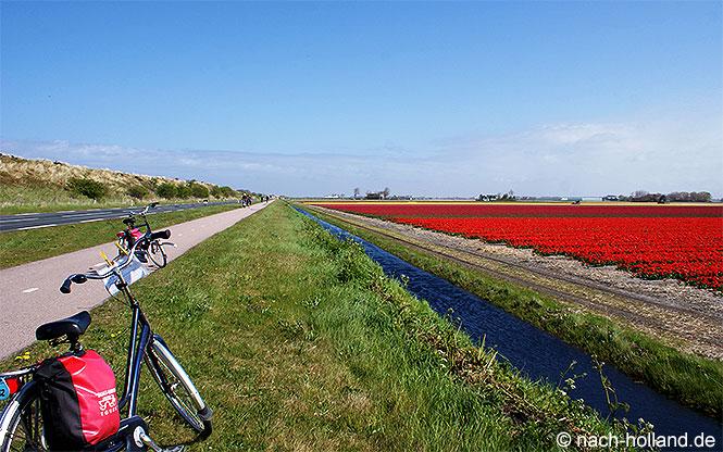 Tulpenfelder Rad- und Schiffsreise Nordholland