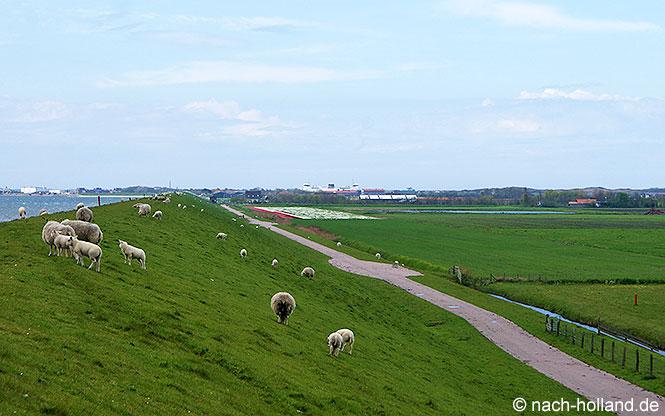 Am Deich entlang auf der Watteninsel Texel