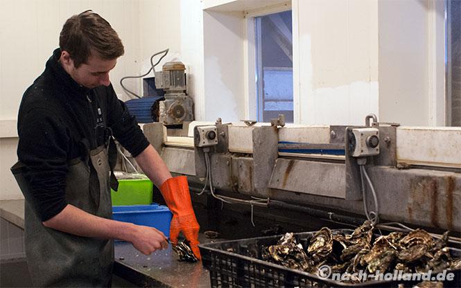 zeeland austern oeffnen oesterij