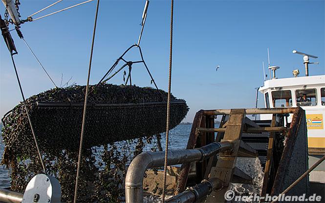 muscheln zeeland an bord