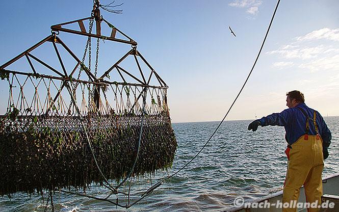 muscheln zeeland fischer