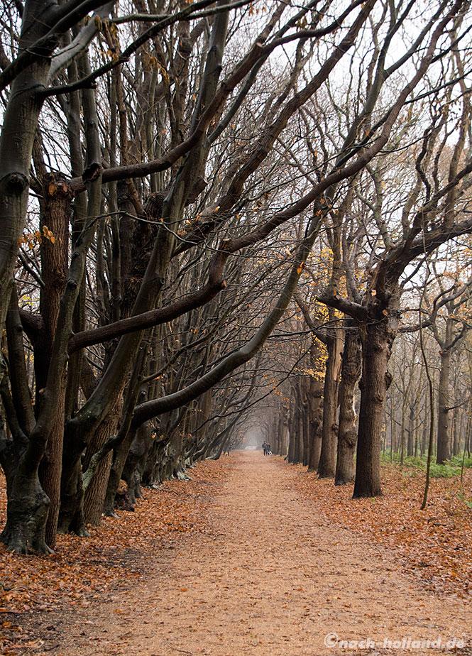 domburg, naturgebiet de manteling