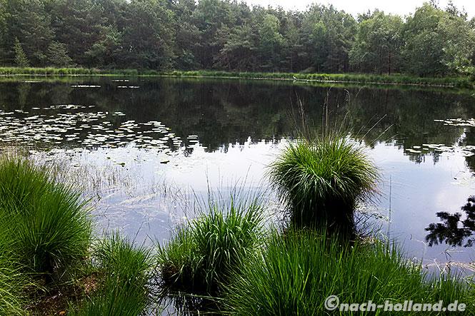 ferienaprk roompot bad bentheim - naturschutzgebiet gildehauser venn
