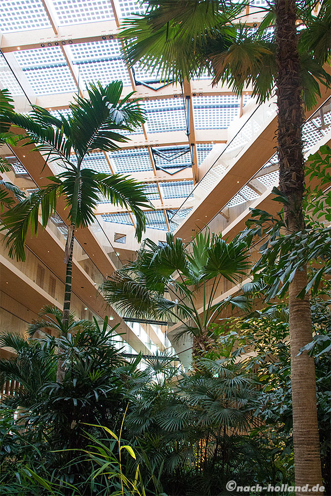 hotel jakarta amsterdam palmen