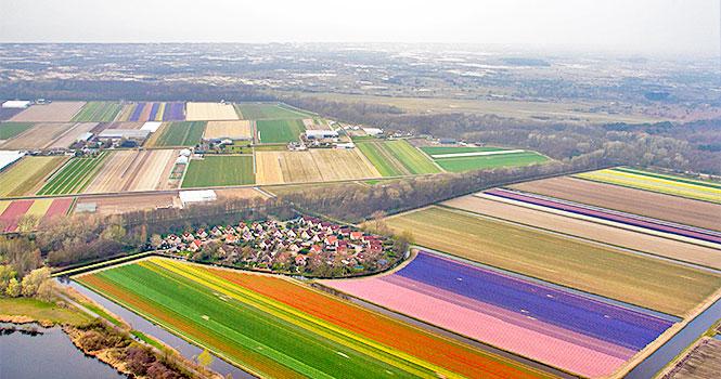 noordwijk tulpenfelder aus der luft