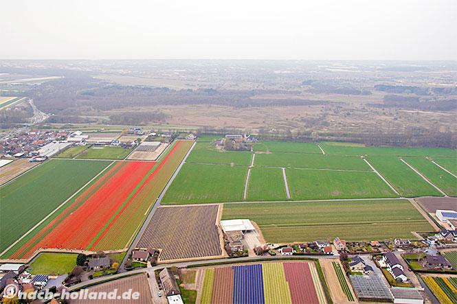 noordwijk, tulpenfelder von oben