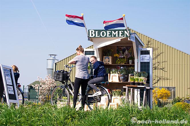 noordwijk tulpenverkauf