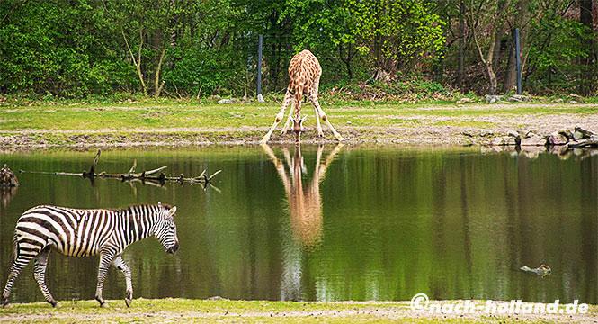 zoo holland karte Zoos in den Niederlanden   Wo sie sind und was sie kosten