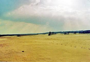 Große Sandflächen im Nationalpark Hoge Veluwe
